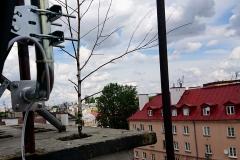Drzewo rosnące w kominie - ciekawostka